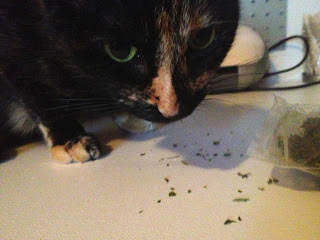Cat with cat nip