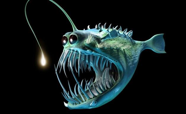 John luc oceanography for Angler fish light