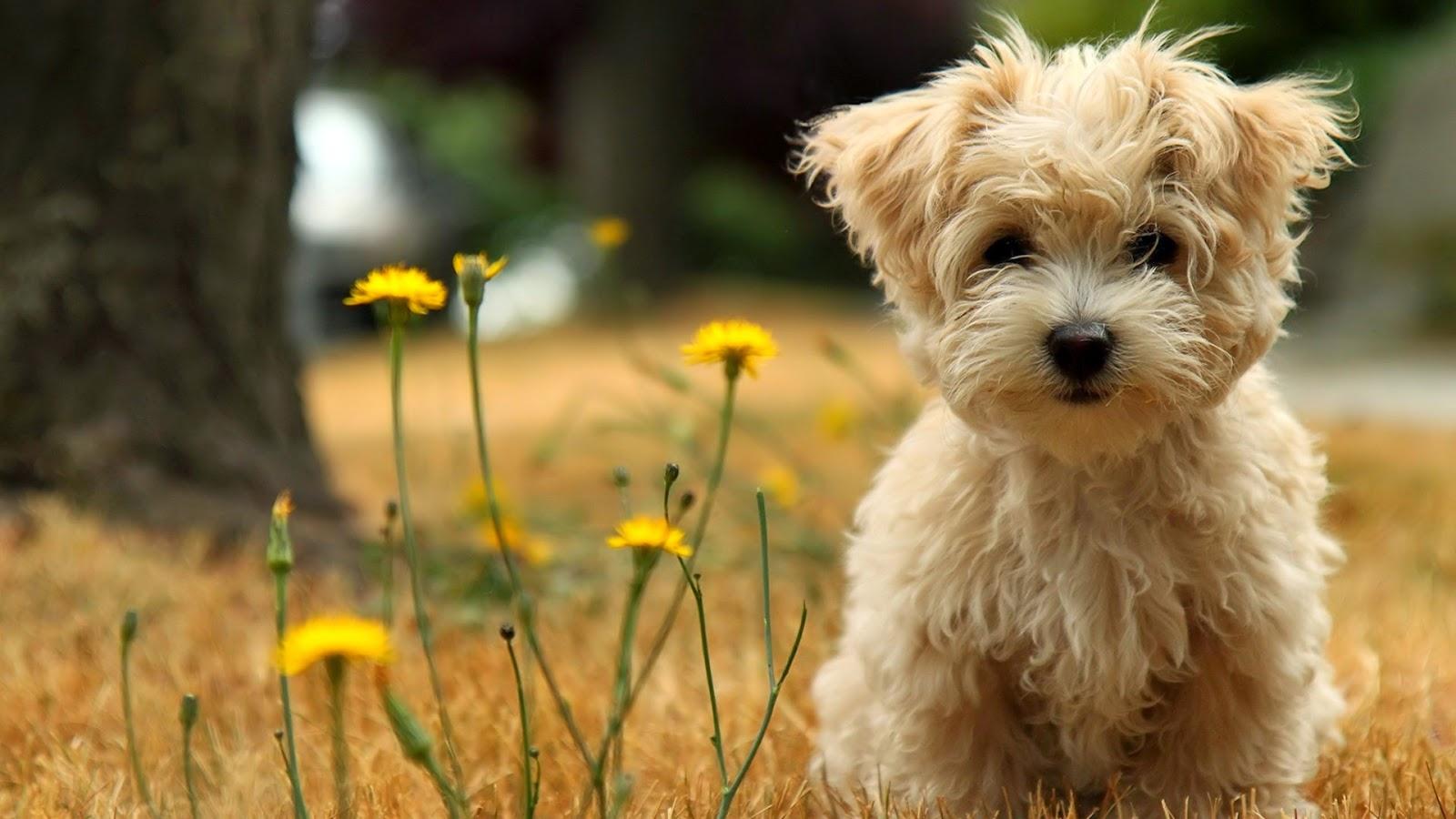 So Cute Brown Little Dog
