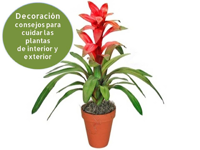 Decoracion consejos para cuidar las plantas de interior y for Plantas para interior y exterior