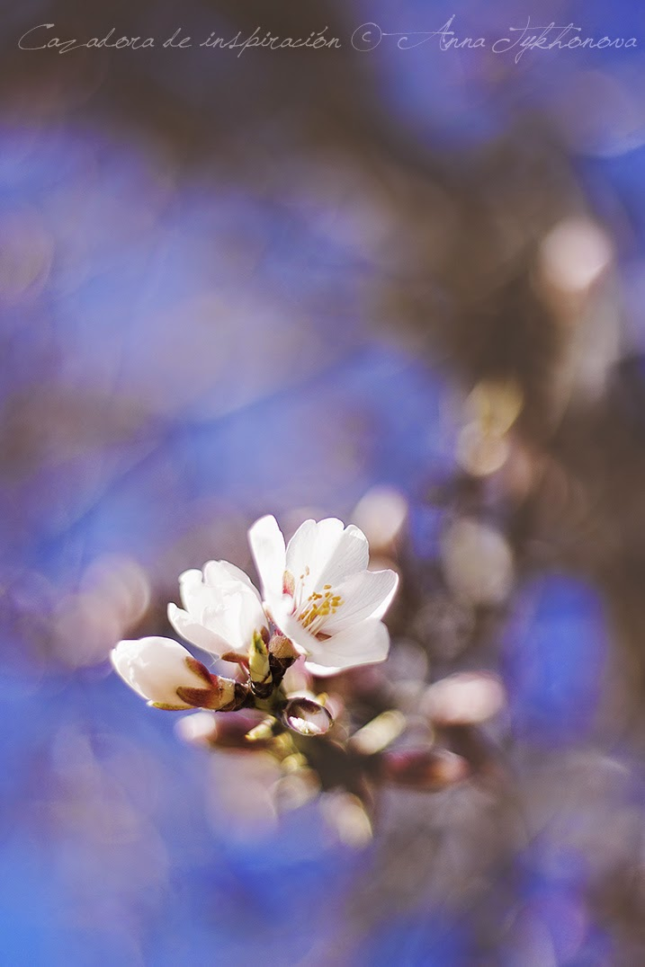 Cazadora de inspiración © Anna Tykhonova - springtime