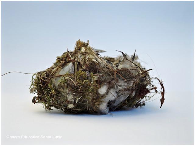 Pequeño nido hecho con ramitas, musgo y plumas - Chacra Educativa Santa Lucía
