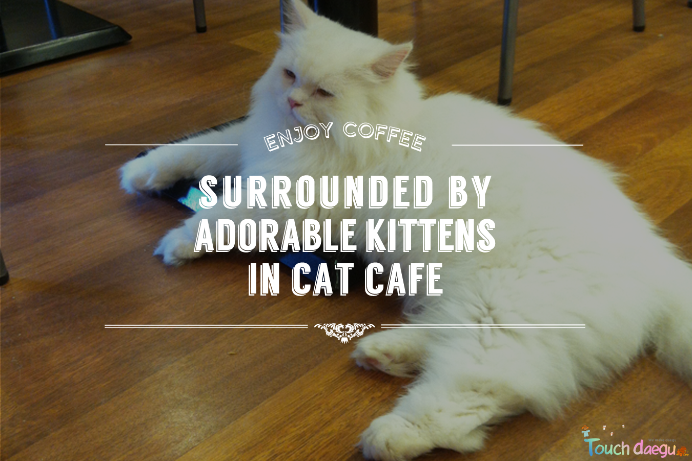 Adorable cat cafe in Daegu
