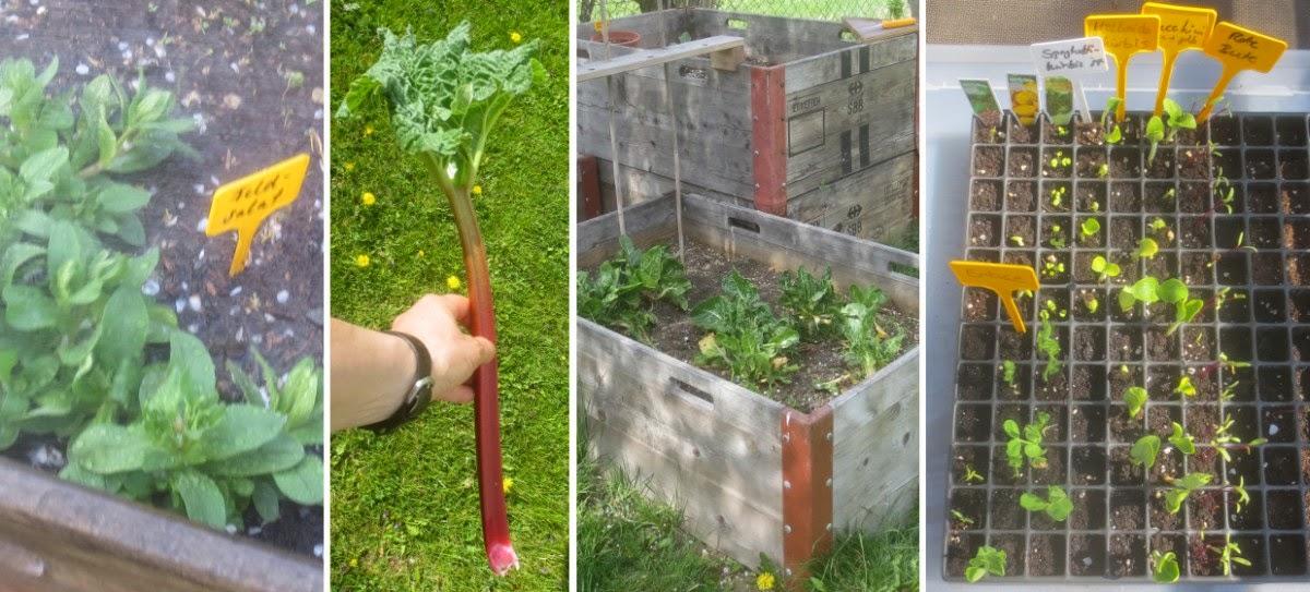 Collage Pflanzen im Garten und auf Beeten