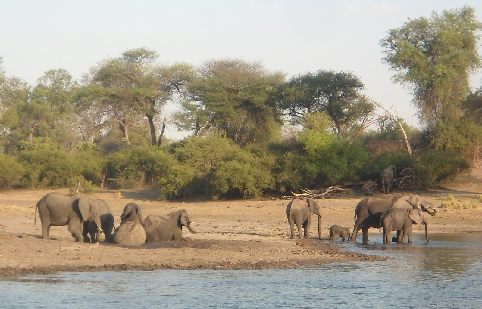 O banho dos elefantes