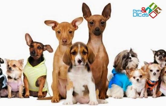 Lista de nomes para cães pequenos, médios e grandes