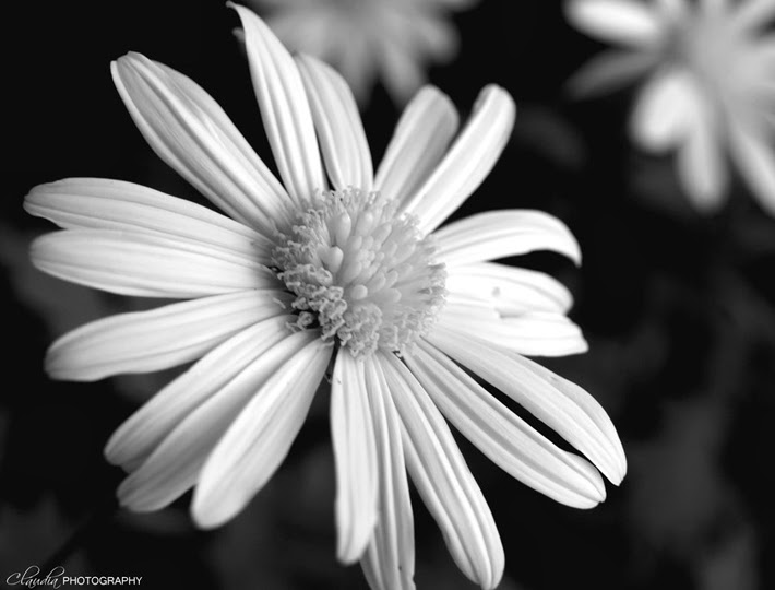 black and white flowers photography