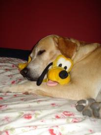 Capone+e+o+Pluto Adeus my LORD!! #alcapone4ever