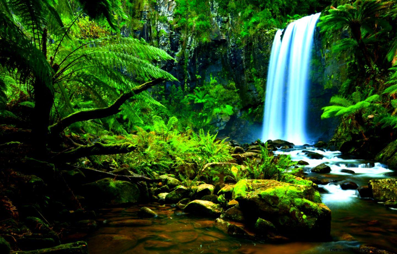 Image   Amazon Rainforest Waterfalls   Animal Jam Clans Wiki