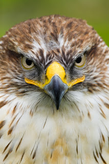 scary face of Falcon