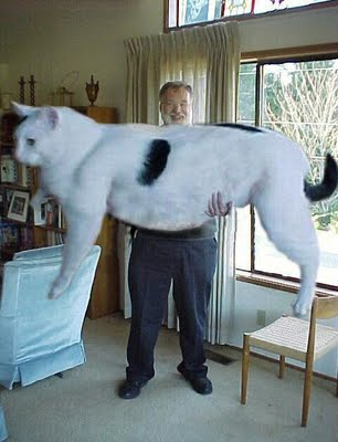 Biggest Cat In The World Guinness 2015 16 biggest pet cats ever took my heart page 4 of 4. say hello to