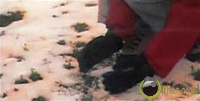 Hujan Salju Berwarna di Siberia