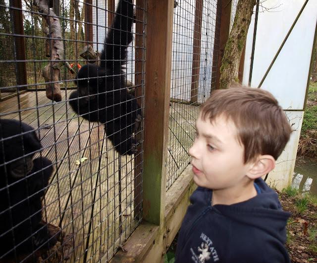 Manor House Wildlife Park Siamang Gibbons Steve Lisa Bryn VIP Experience Danny
