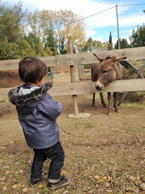 blog maman maitresse instit paris enfants famille ferme âne
