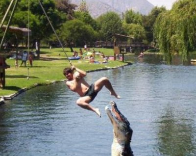 Latest Funny Pictures: Funny Crocodile Photoes