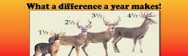 Lower Peninsula Deer Management Initiative