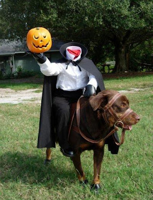 Headless horseman Halloween costume for dog.