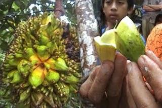 AJAIB Pokok Nangka Berbuah Pisang Perisa Durian
