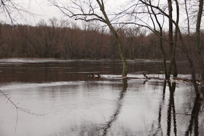 St Croix River bank full+