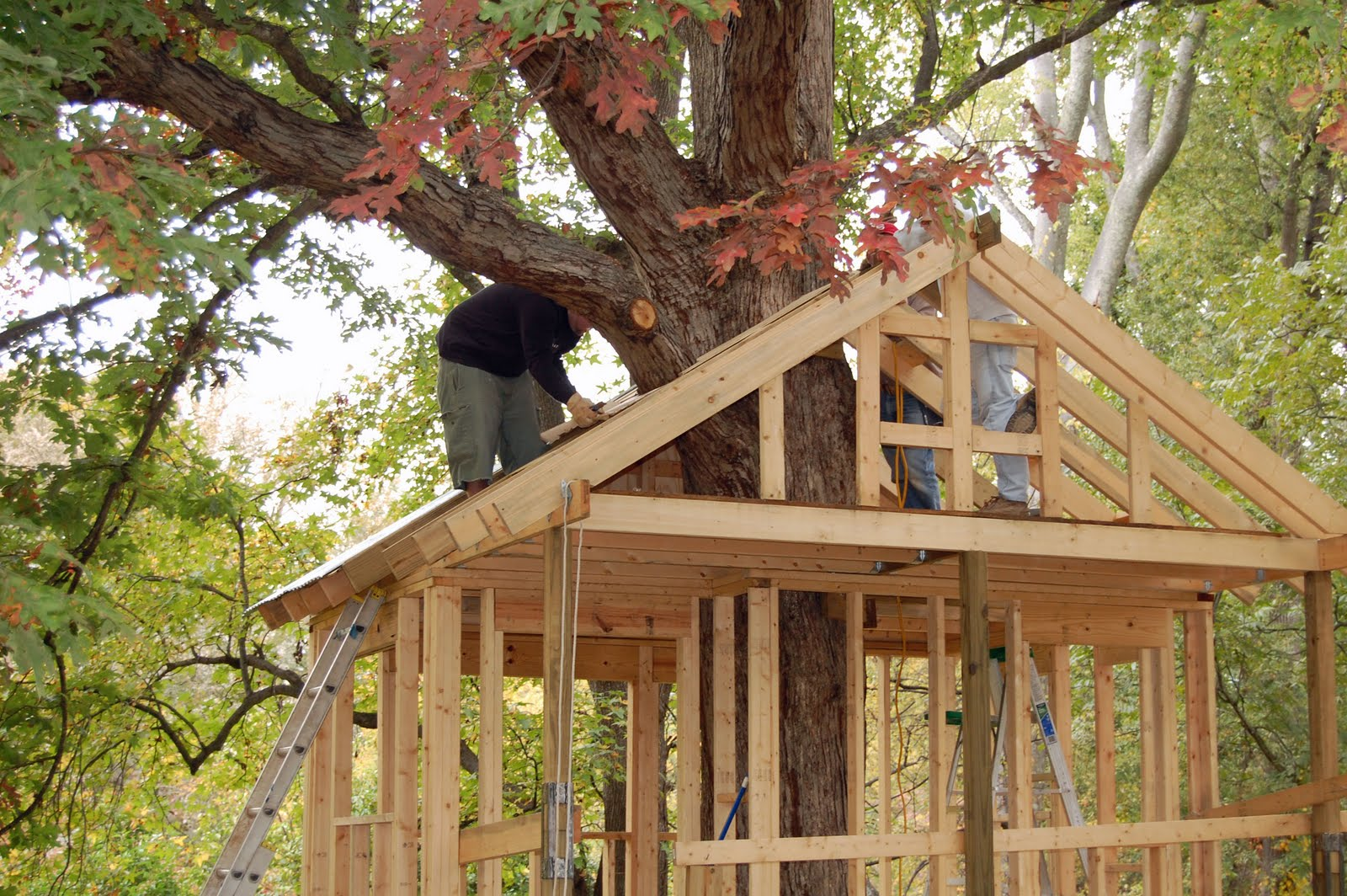 Simple Tree House Designs Tree house build
