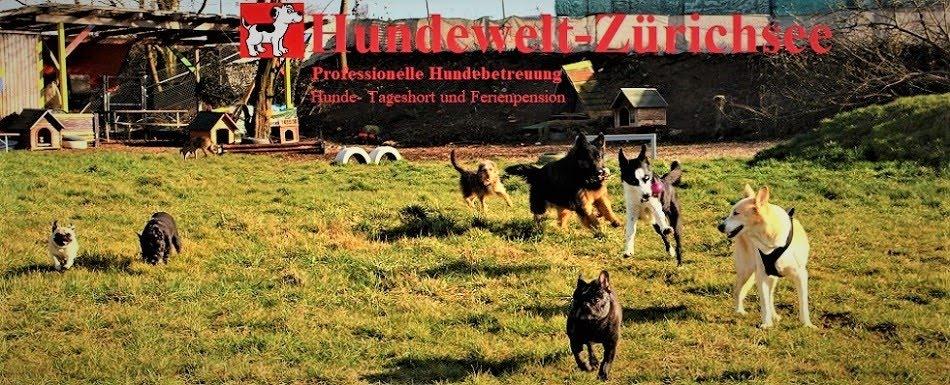 Fotos von Hundewelt-Zürichsee; Professionelle Hundebetreuung ZH