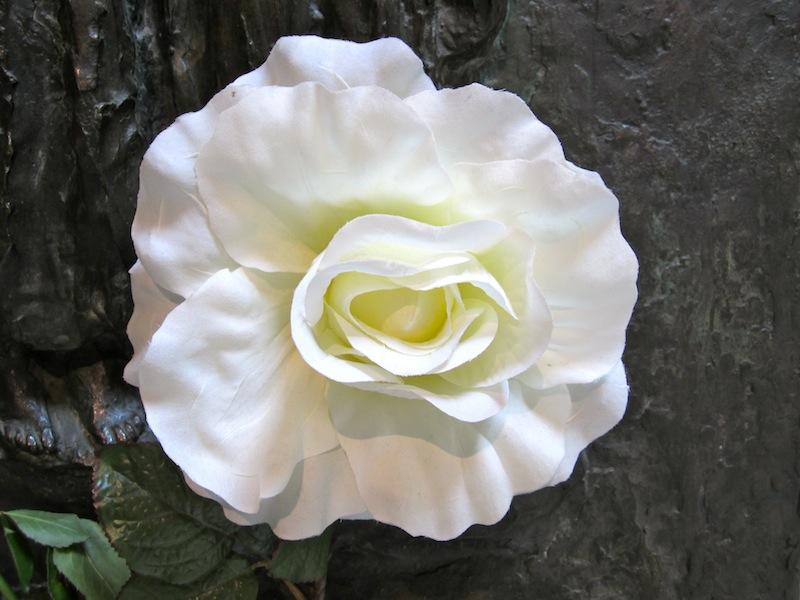 binewins bilder: gedenken an die weiße rose