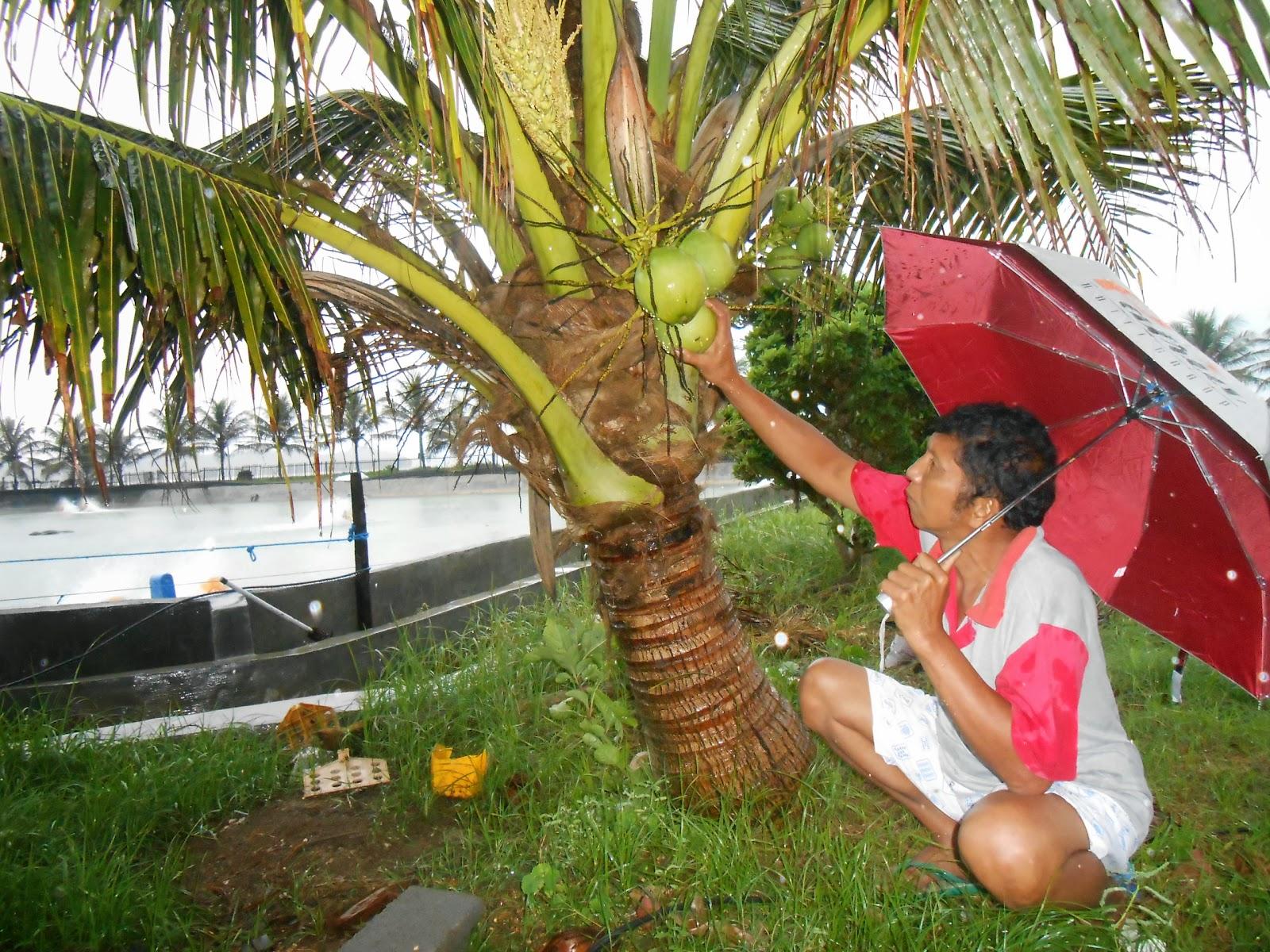 Bibit Tanaman Buah Langka Unggul Daerah Kota Blitar Jenis