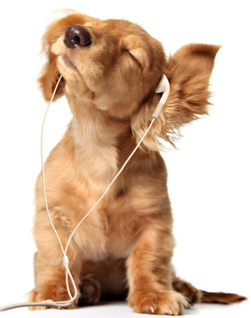 Puppy listening to music,listening to music, cute puppy