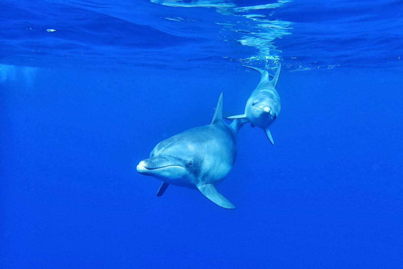 ハンドウイルカの画像 p1_25