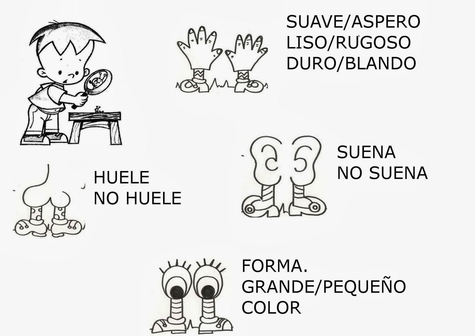 Encantador Mis Cinco Sentidos Para Colorear Bosquejo - Dibujos Para ...