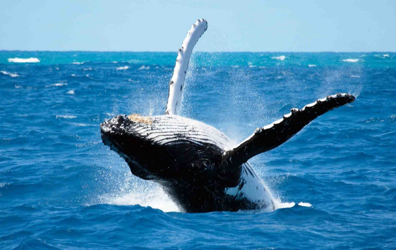 Best Whale Watching Tours In Santa Barbara Most Kind