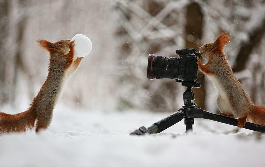 adorable squirrel photos vadim trunov