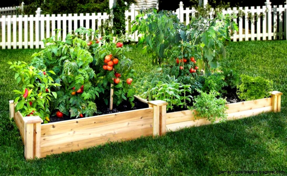 Diy Raised Garden Beds Australia  The Garden Inspirations