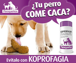 Koprofagia