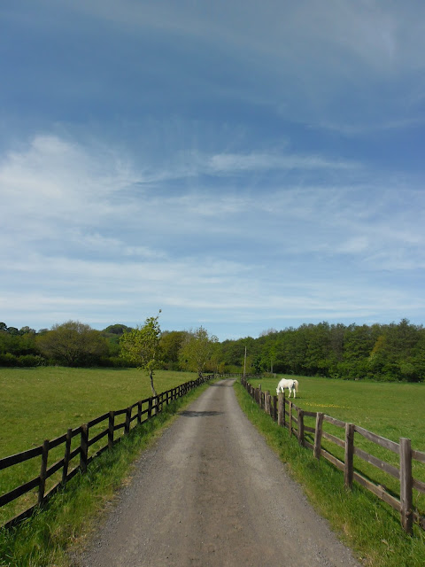 Countryside lane - Clent - Worcestershire - Summer