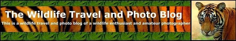 The Wildlife Travel and Photo Blog