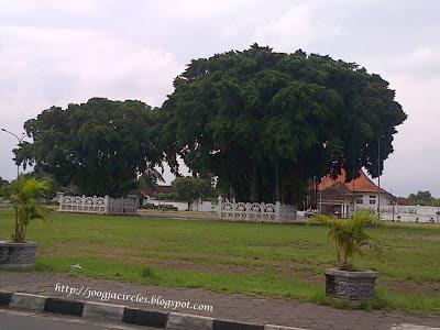 Sepasang Pohon Tua di Alkid | Joogja Cirlces