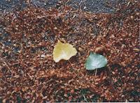 dos hojas caídas