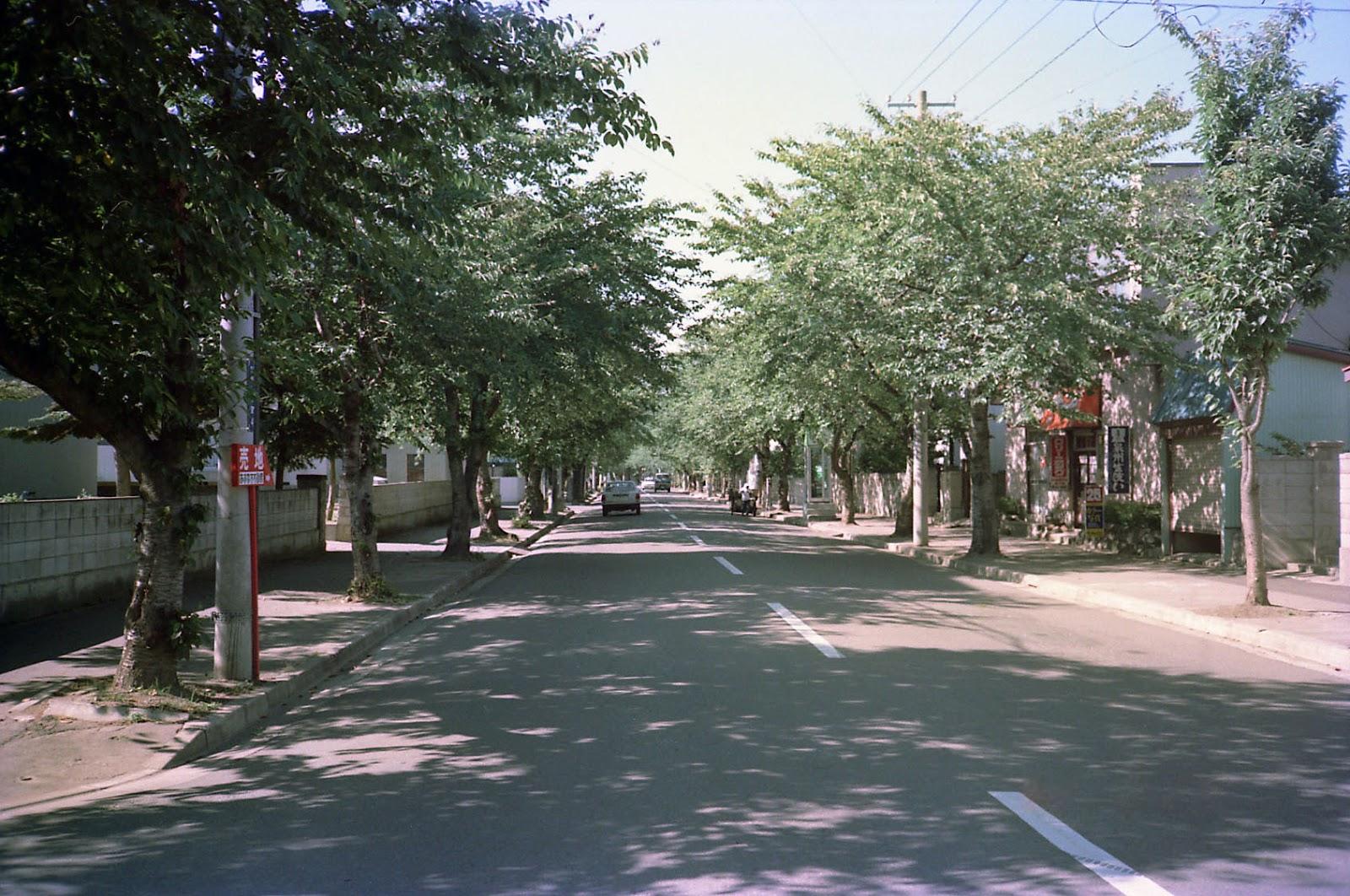 夏の桜並木,道路,青森〈著作権フリー無料画像〉Free Stock Photos