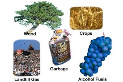 electricity from biomass