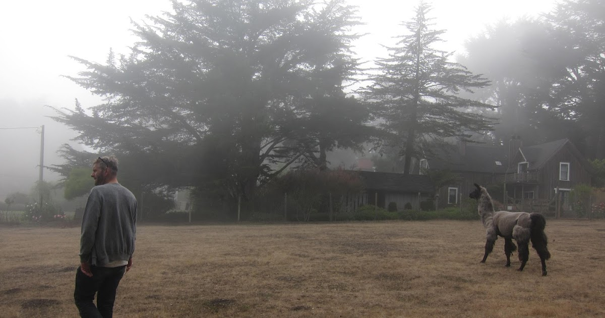 mendocino dating Book mendocino campground, mendocino on tripadvisor: see 21 traveler reviews, 63 candid photos, and great deals for mendocino campground, ranked #2 of 9 specialty lodging in mendocino and rated 45 of 5 at tripadvisor.