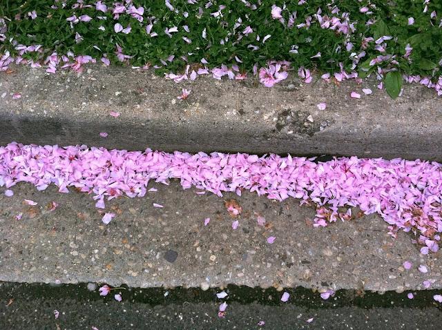 Cherry-Blossom-Litter-Spring-2013