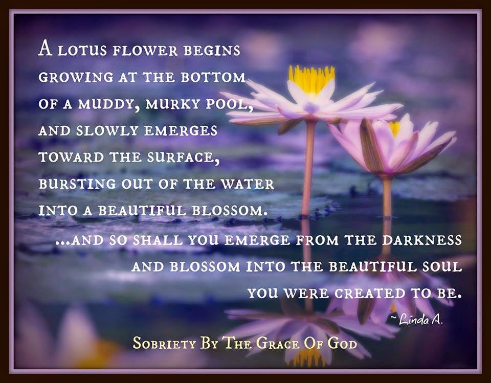 A Lotus Flower Begins Growing At The Bottom Of A Muddy Quotes
