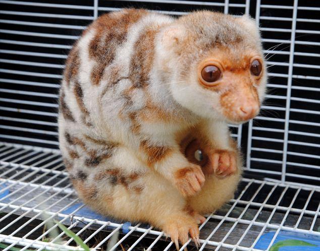 Haiwan misteri diserah ke Zoo Wenling di China