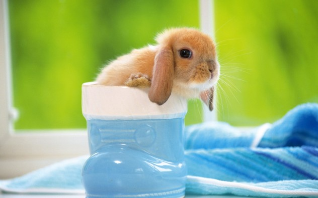 baby animals pictures, animals in cups, cute animal pictures, tiny animals in cups, adorable baby animal pictures, small animals in cups