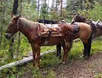 Horseback riding outdoor attraction