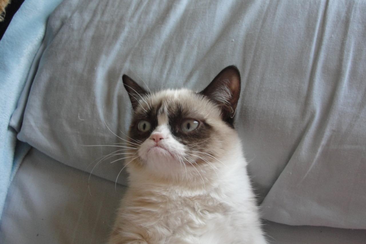 http://tardthegrumpycat.tumblr.com/post/35026388548/good-evening-from-grumpy-cat