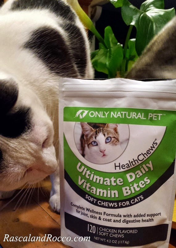 Healthy Lifestyle Tips from a Yogi Cat #PawNatural #naturalcatfood #cattreats #catvitamins