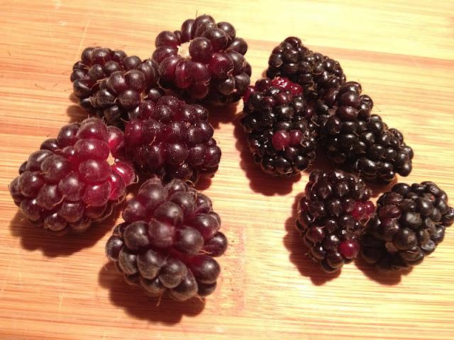 in the Hopeful Kitchen: Blackberry Slump
