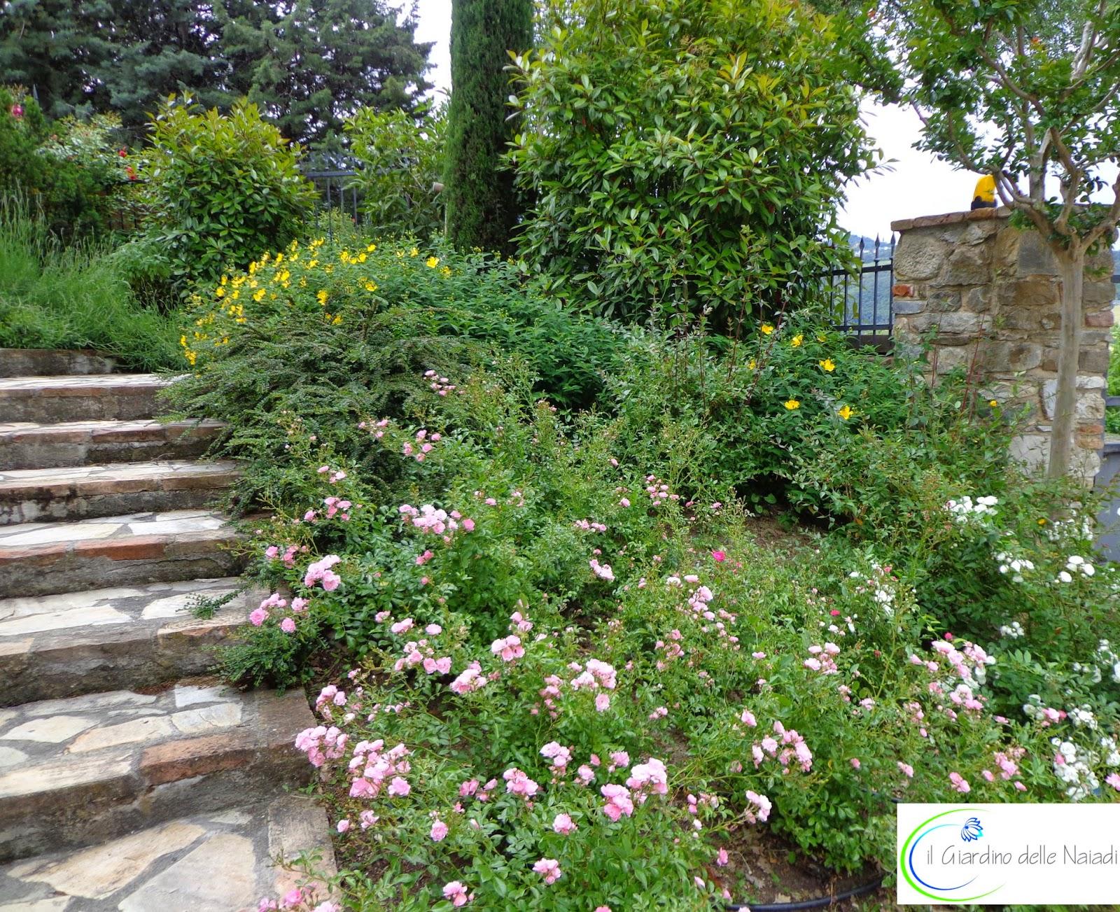 Il giardino delle naiadi un giardino in stile provenzale - Foto di giardini fioriti ...